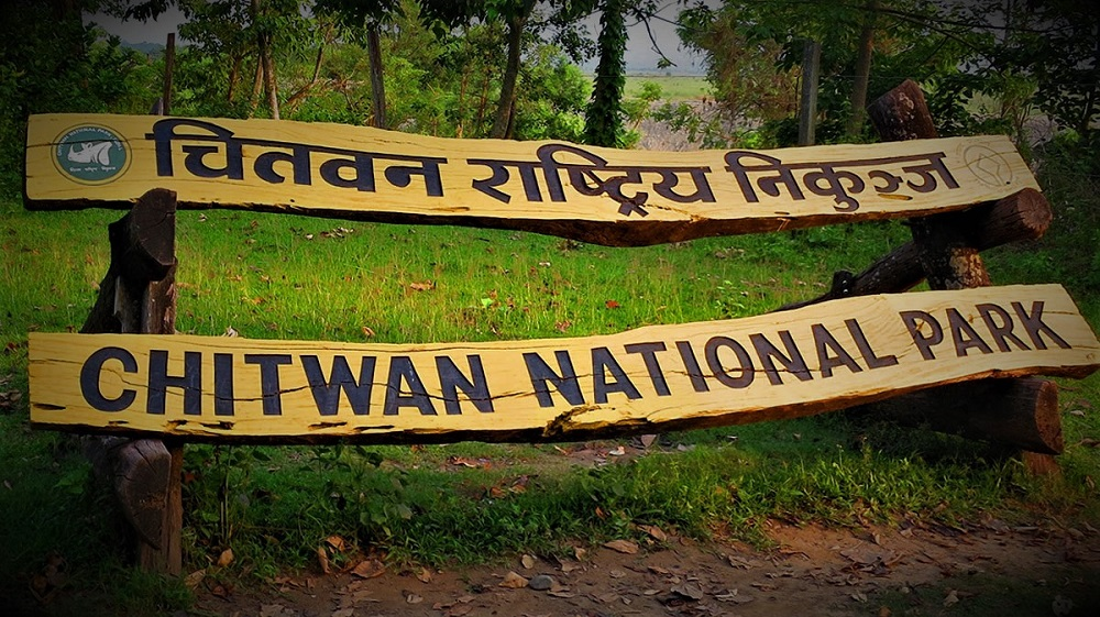 Jungle Safari in Chitwan 8